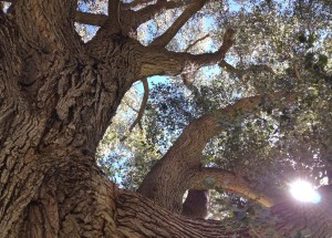 Zion Tree Trunk with sun